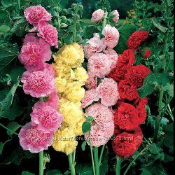 семена элитных цветов