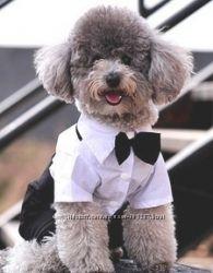 нарядный костюм для собак, фрак  для любого торжества