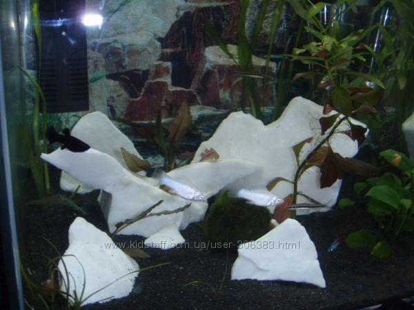 Эксклюзивный камень для декора аквариума.