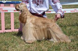 Качественная стрижка собак, г. Запорожье