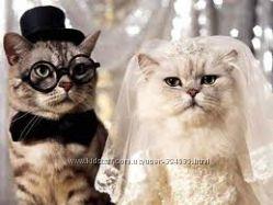 Лучшие невеста и жених заслуживают персональный стих