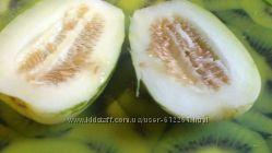 Семена неприхотливой и вкусной  огурдыни