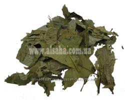 Листья Гуавы Сушеные