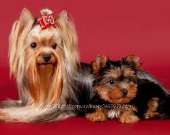 Груминг студия Арчибальд предлагает стрижку, груминг собак и котов, Киев
