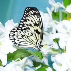 Глаз не отвести от Бумажного Змея живой бабочки