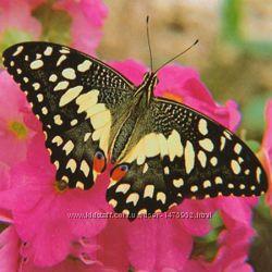 Живая бабочка Демолеус