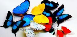 Салют из бабочек  удиви свою вторую половинку