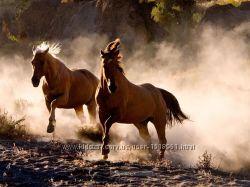 Гранд каньон и грациозные лошади