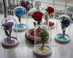 Роза в колбе, роза в куполе, роза красавица и чудовище