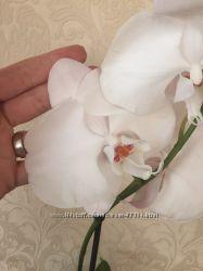 Продам орхидею Белый гигант